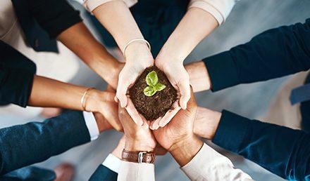 Mãos segurando uma muda de planta | A relação entre o meio ambiente e as empresas