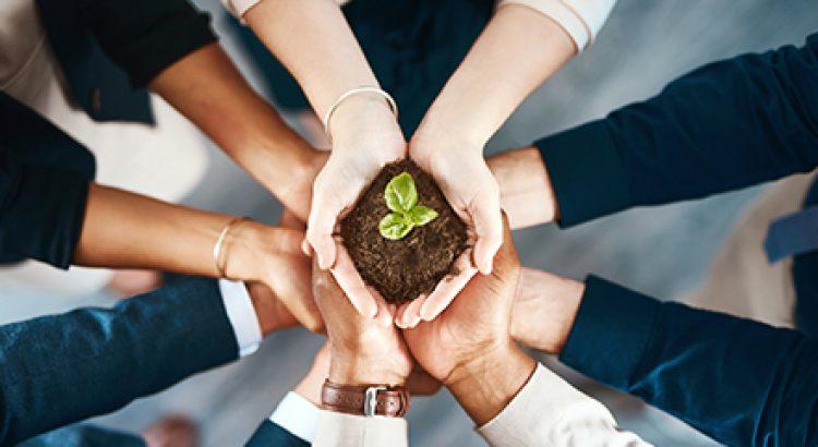 Mãos segurando uma muda de planta   A relação entre o meio ambiente e as empresas